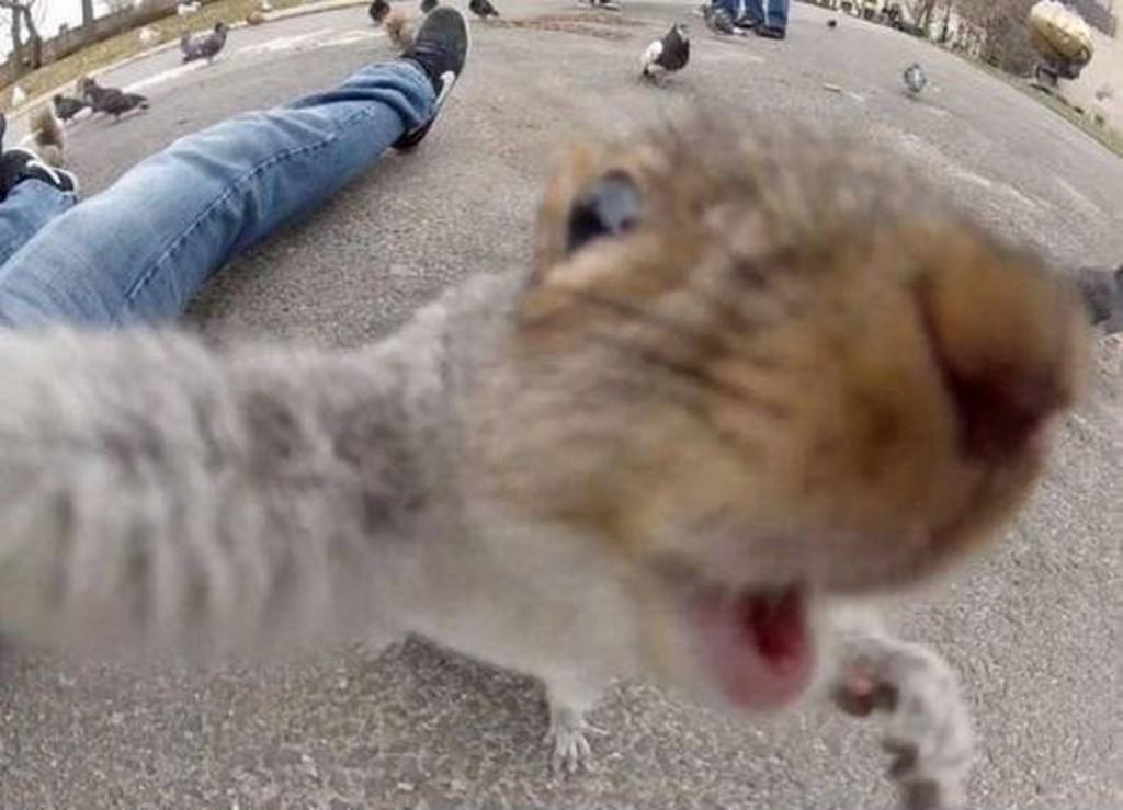 Fish-Eye Up-close selfie