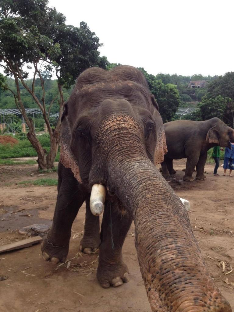 Yes, elephants too