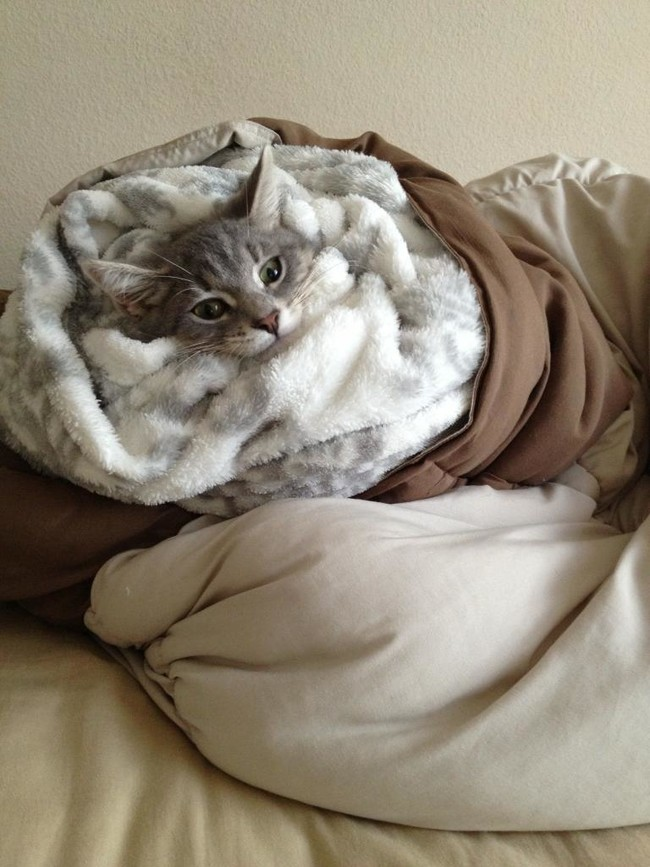 These Adorable Little Animals Got Wrapped Up and Look Like