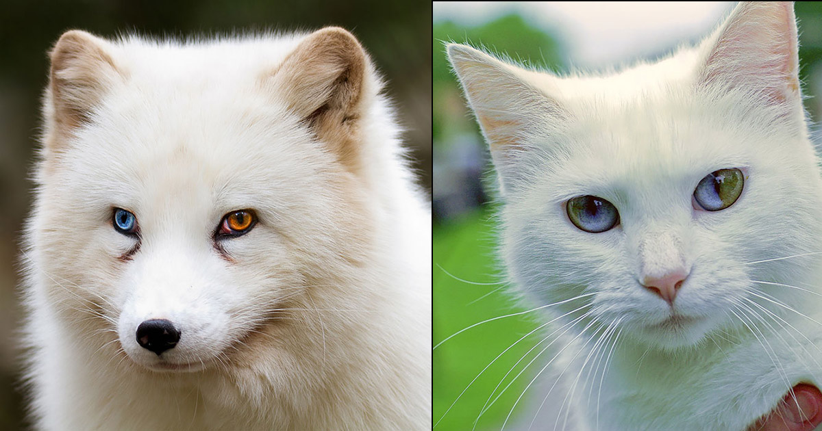 So many kittens have different color eyes. so cute.. I