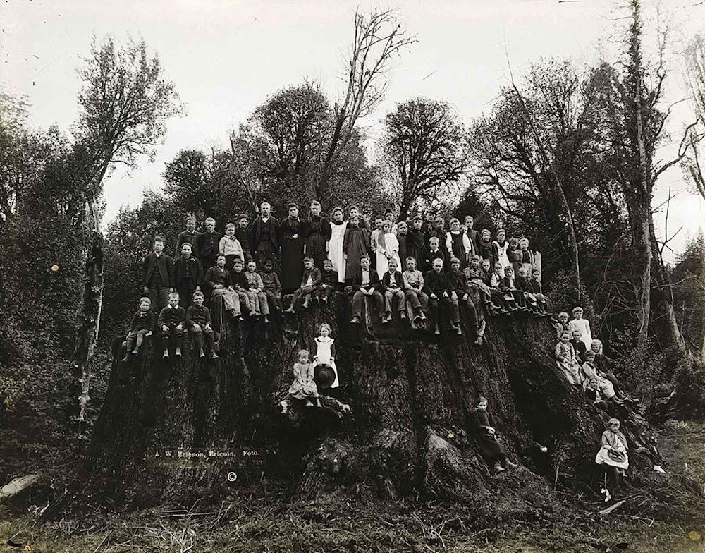 The Fieldbrook Stump