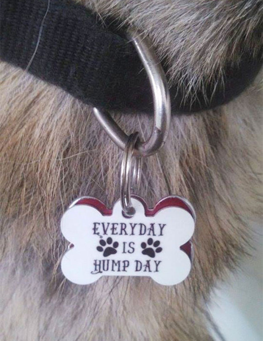 27 Collars Show That These Pets Have Funny And Sarcastic