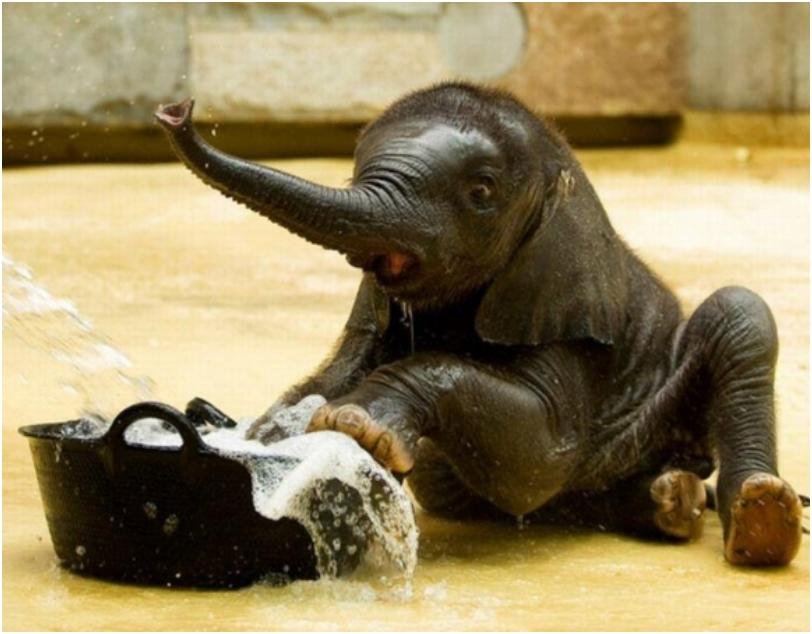 Baby-Animals-039