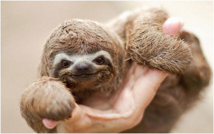 Cuteness Overload 45 Way Too Cute Wild Baby Animals