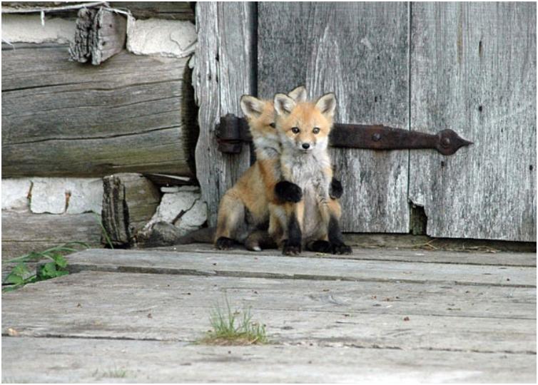 cute-baby-animals-39