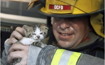 firefighters-rescuing-animals-saving-pets-5-5729b683d13e7__605
