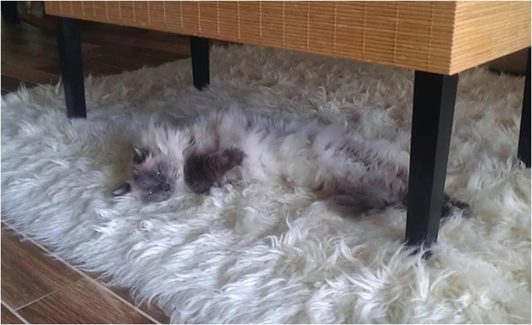camouflage-animals-pets-funny-102__605