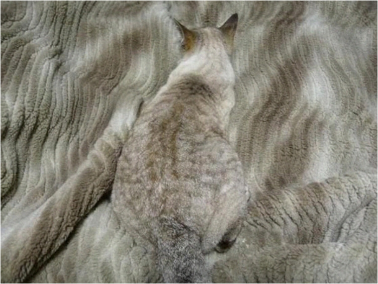 camouflage-animals-pets-funny-103__605
