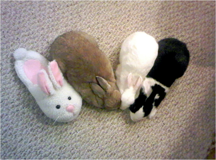 camouflage-animals-pets-funny-6__605