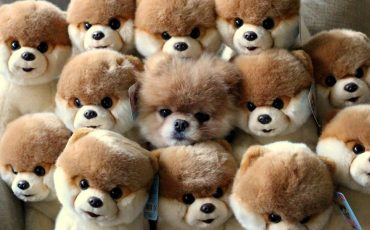 camouflage-animals-pets-funny-9__880
