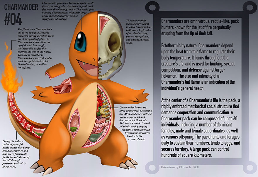pokemon-anatomy-pokenatomy-christopher-stoll-2