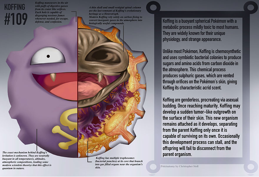 pokemon-anatomy-pokenatomy-christopher-stoll-4