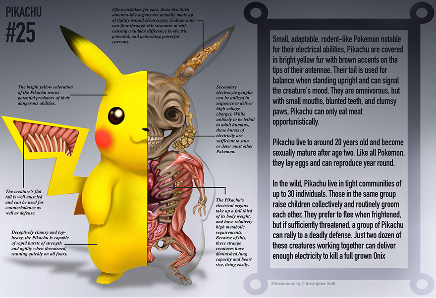 pokemon-anatomy-pokenatomy-christopher-stoll-6
