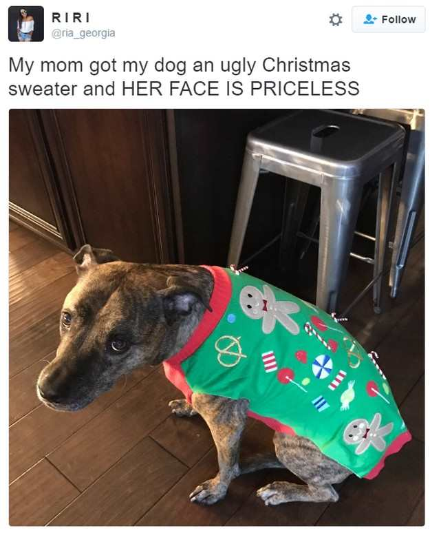 15-dogs-from-twitter-in-christmas-sweaters-03
