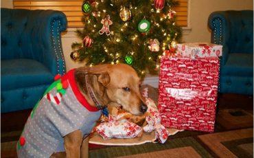 animals-do-not-like-christmas-104-585295a9e8c8b__700