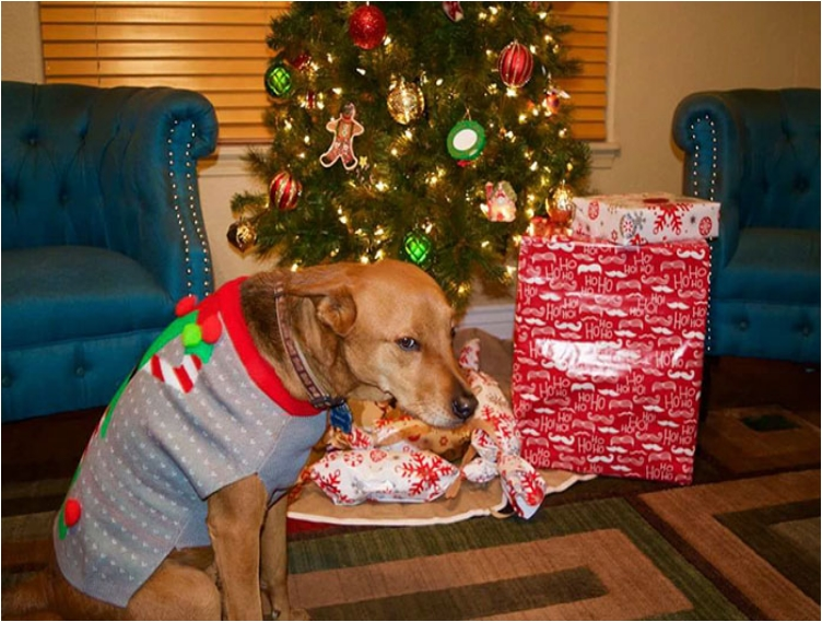 animals-do-not-like-christmas-104-585295a9e8c8b__700