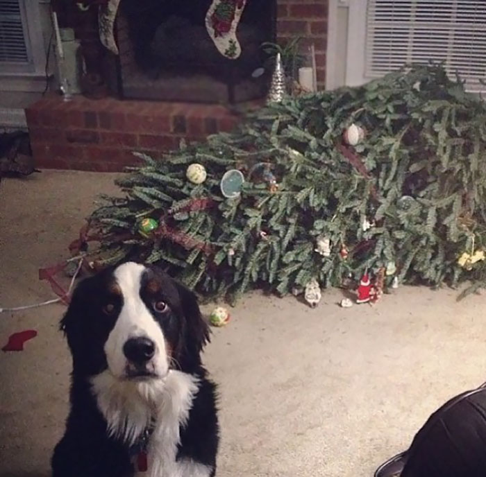 animals-do-not-like-christmas-108-585296e7d478b__700