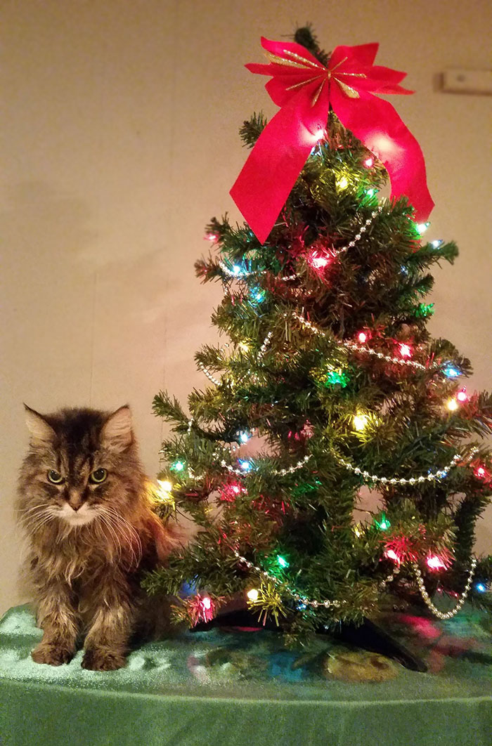 animals-do-not-like-christmas-113-58529e3aa965a__700