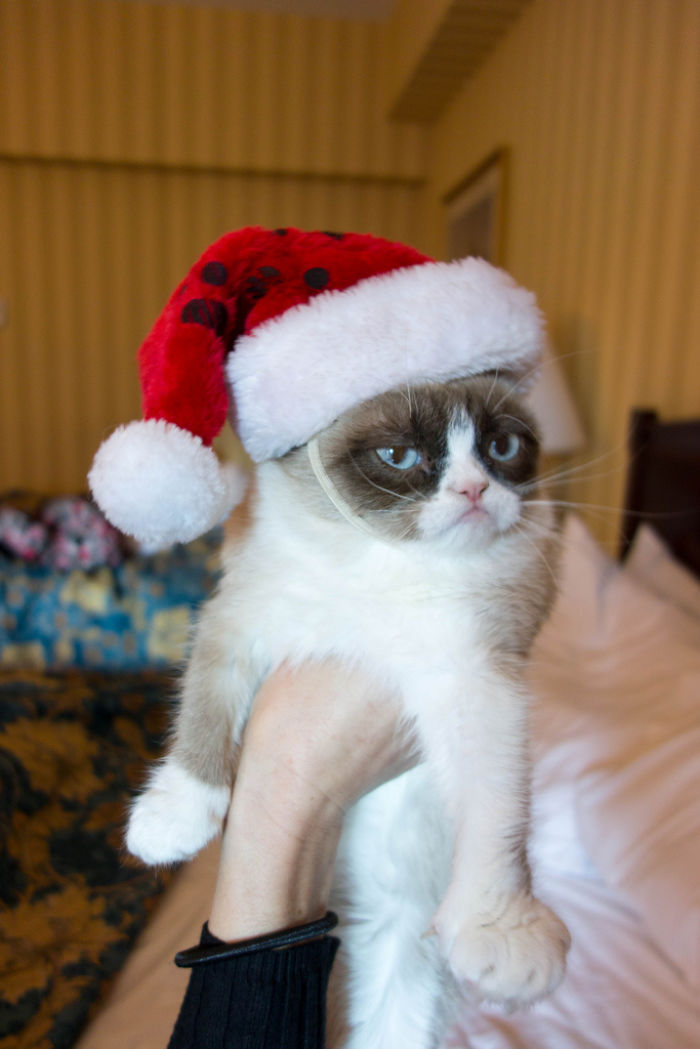 animals-do-not-like-christmas-583599e487dd2__700