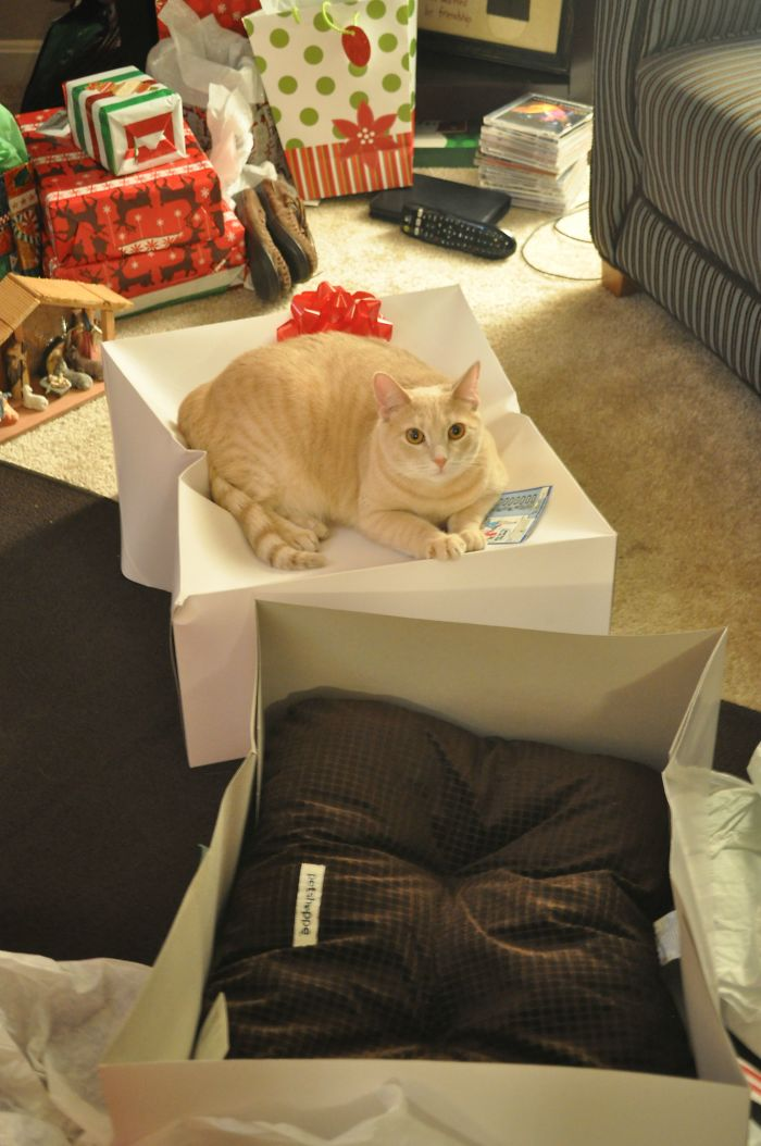 animals-do-not-like-christmas-583599f201cca__700