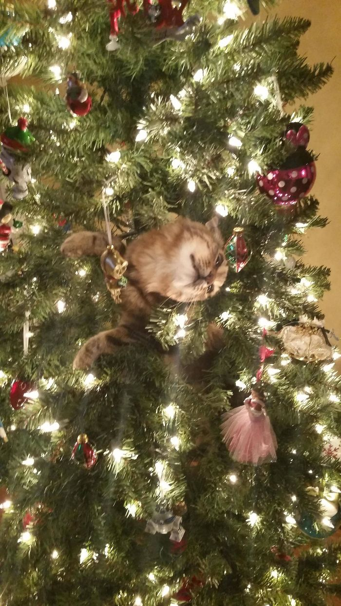 animals-do-not-like-christmas-583599f785b84__700