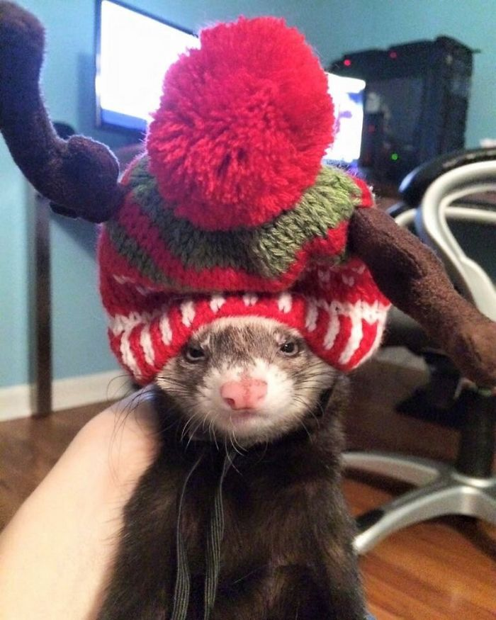 animals-do-not-like-christmas-5838136c43a8c__700
