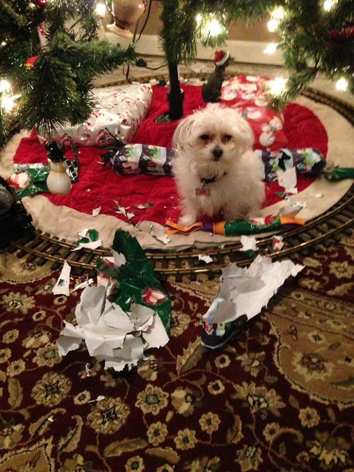 animals-do-not-like-christmas-58381370b1b64__700