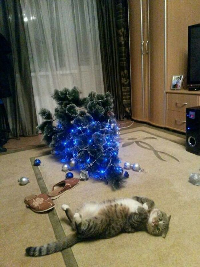 animals-do-not-like-christmas-58383ac70d817__700