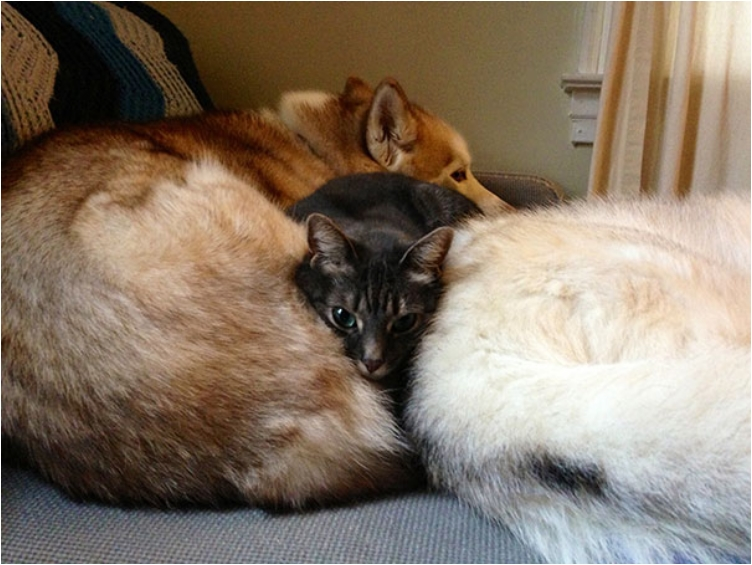 cute-cats-sleeping-on-dogs-10__605