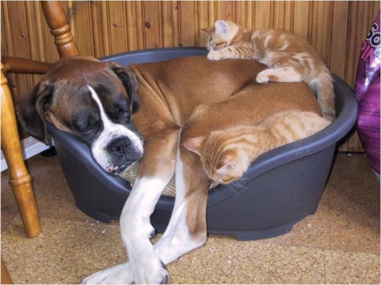 cute-cats-sleeping-on-dogs-27__605