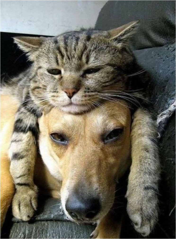 cute-cats-sleeping-on-dogs-7__605