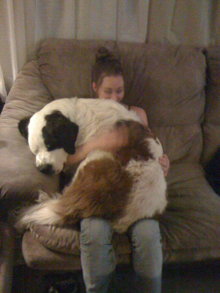 37 Cuddly Big Dogs Think They Re Lap Dogs