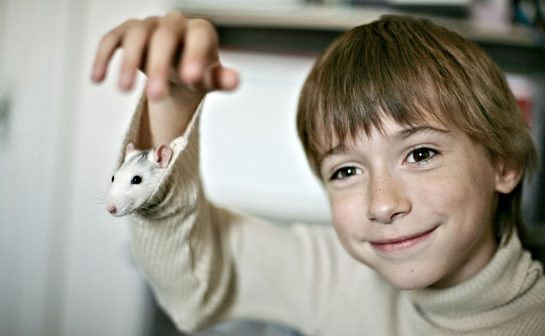 Kid With His Pet Rat In Shirt Sleeve